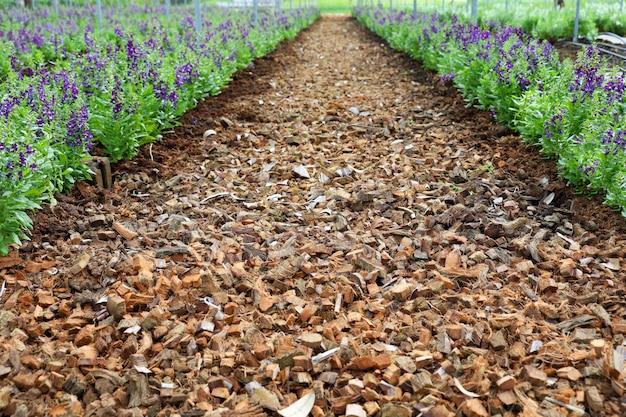 紫の花のために乾燥した刻んだココナッツの皮は美しい視点です
