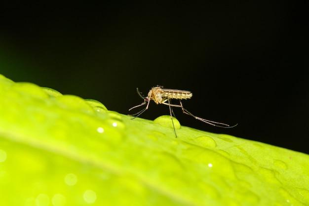 緑の葉に蚊のバグを閉じる