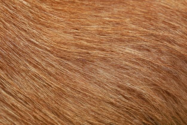 茶色の犬の毛皮のテクスチャ背景を閉じる