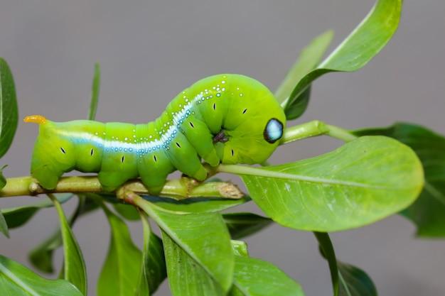 Зеленый червь на дереве в природе