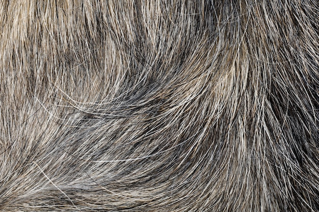 テクスチャとパターンの灰色の犬の皮を閉じます。
