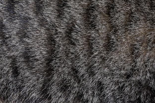 パターンと背景の灰色の猫の皮を閉じる