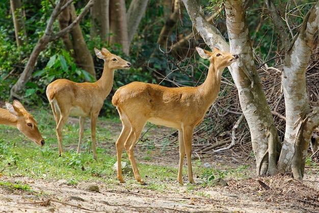 Группа оленей в лесу