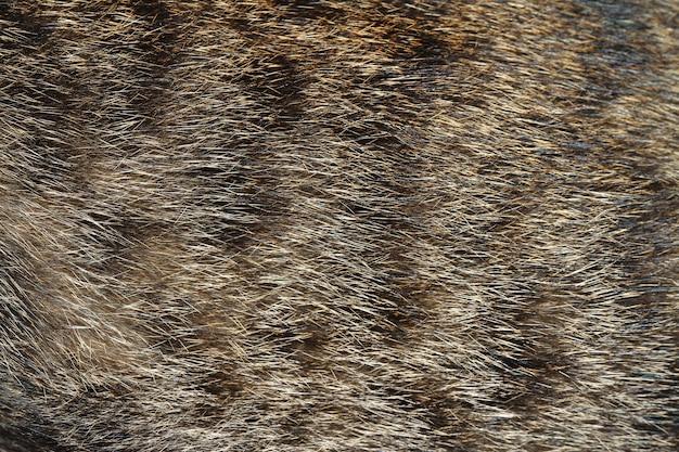 背景の灰色の猫の皮