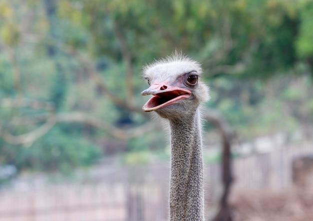 Закройте вверх по страусу фокуса головному в саде природы лета на таиланде