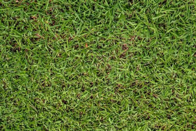 テクスチャ自然の緑の草の背景