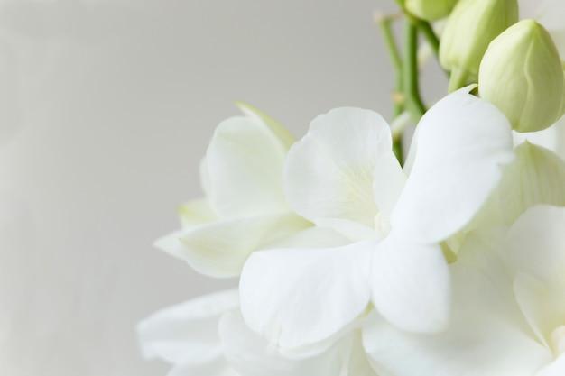 Белая орхидея на фоне серого цвета
