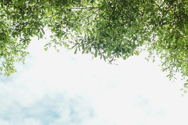 青い空を背景に緑の葉