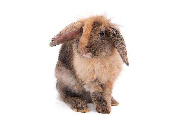 Изолированный портрет кролика