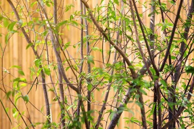 庭の緑の葉