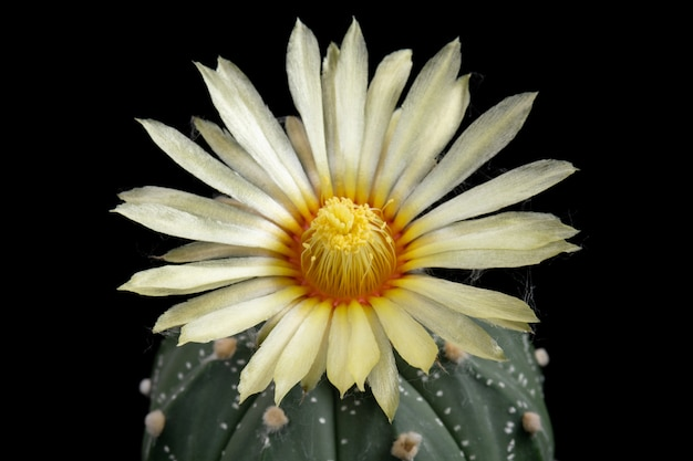 Кактус цветок картинки красивые цветущие в красочных.