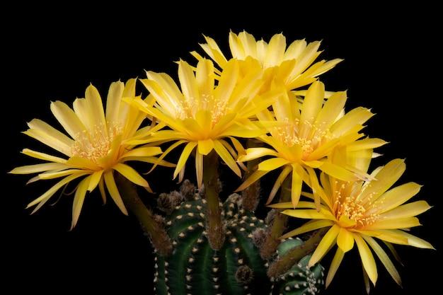 カラフルに咲く美しいサボテンの花の写真。