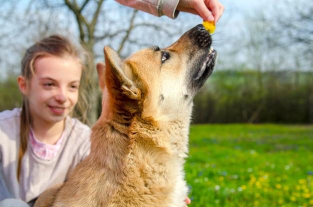 犬は公園のタンポポ花の香りを嗅ぐ。