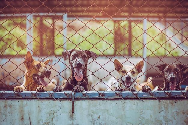 Заделывают бродячих собак. покинутые бездомные бездомные собаки лежат в фундаменте.