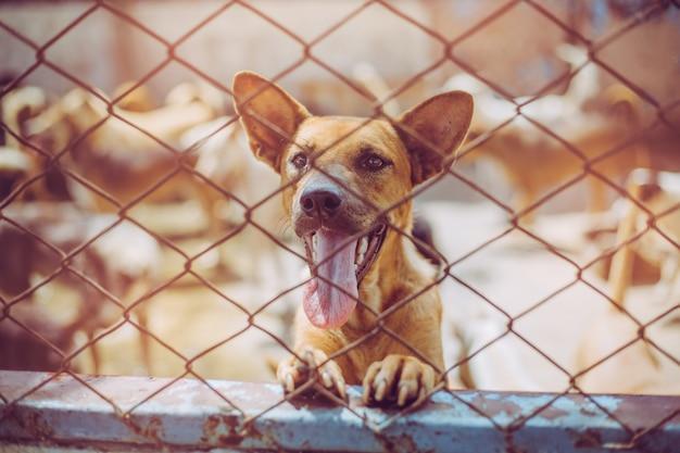 野良犬を閉じます。放棄されたホームレスの野良犬は基礎に横たわっています。