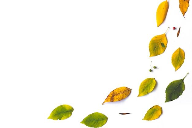 白い背景の上の秋の乾燥葉から作られたフレーム。
