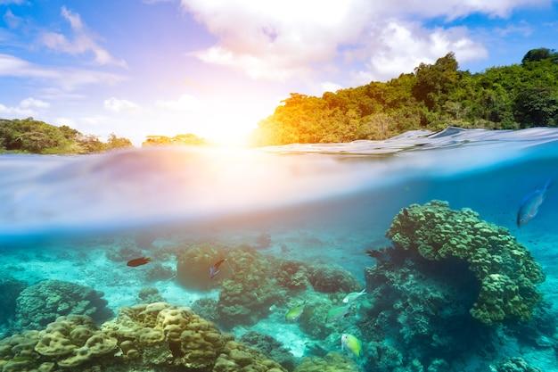 水中部品とサンゴのテンプレート、水から分離した太陽。