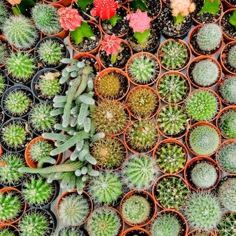 サボテン砂漠の植物。