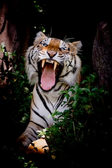 Тигр ищет свою добычу и готов поймать ее