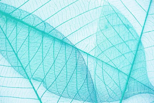 抽象的なブルーグリーンリーフテクスチャ背景