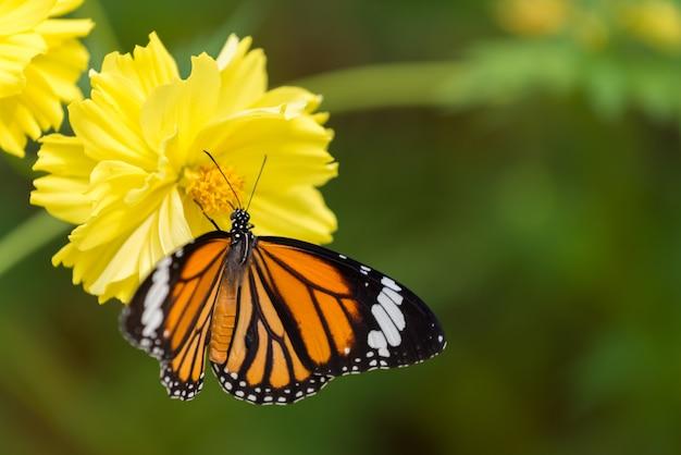 花と宇宙の蝶