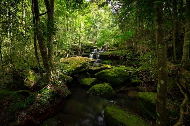 Закройте вверх по водопаду взгляда в глубоком лесе на национальном парке, сцене реки водопада.