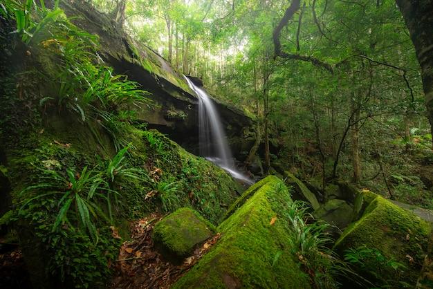 国立公園、滝の川のシーンで深い森のビュー滝を閉じます。