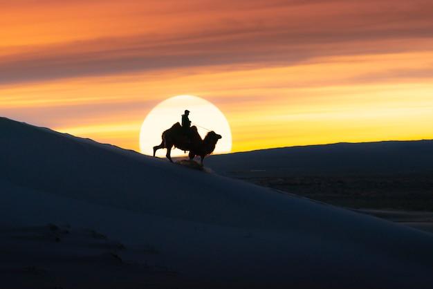 Верблюд идя через песчанные дюны на восходе солнца, пустыня гоби монголия.