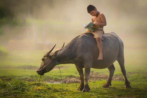 水牛に乗って、教育のための本を読んでいる少年たち。