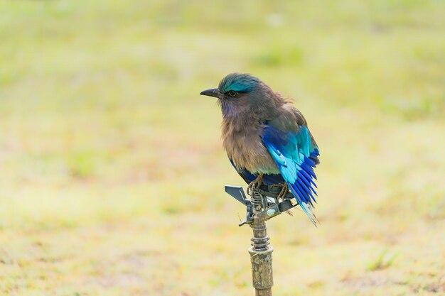 カワセミ。鳥。自然の中で美しい鳥