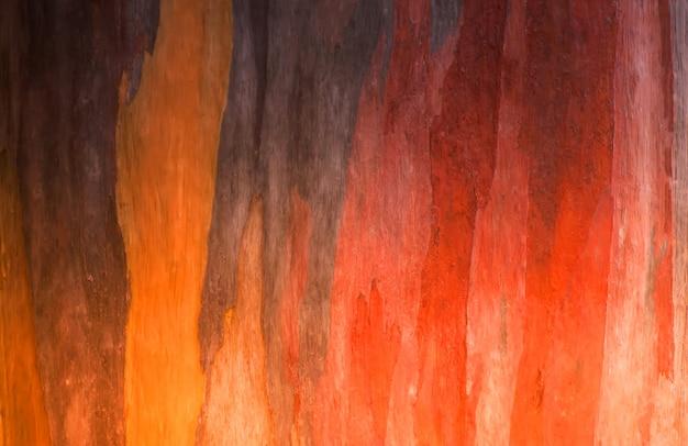 ユーカリの木の背景の樹皮