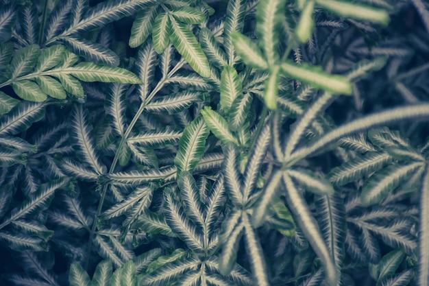 自然の緑の葉