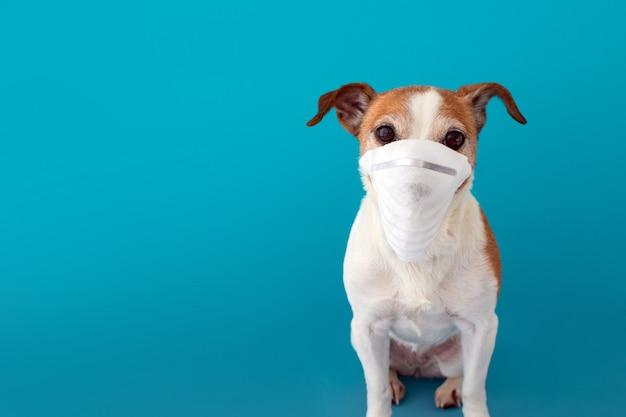 Собака носит медицинскую маску, чтобы защитить себя от инфекции