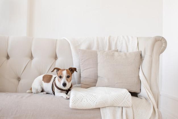 ソファの上で少し犬