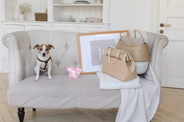 レトロなスーツケース付きのソファの上で少し犬