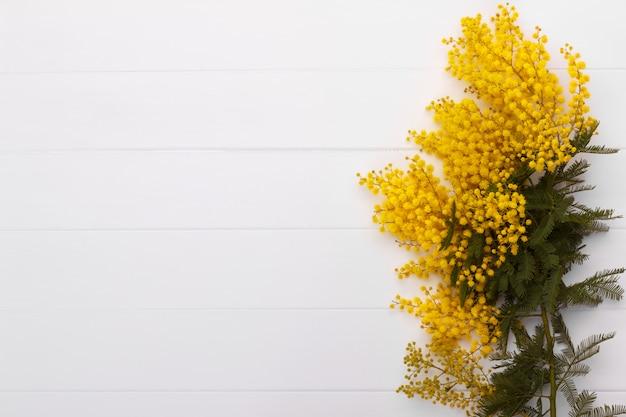 春のミモザの枝