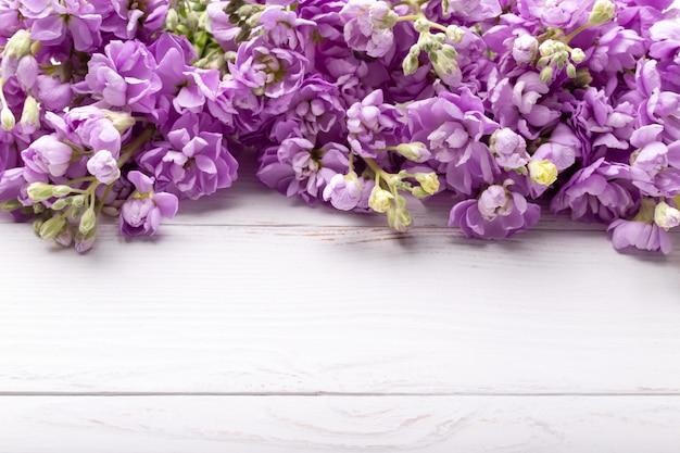 Весенние сиреневые цветы матиолы