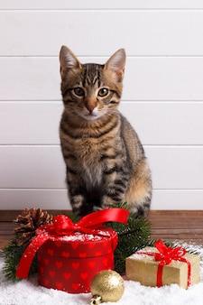 かわいいベンガルの子猫