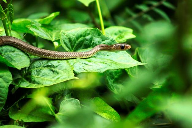 Змея спит в саду
