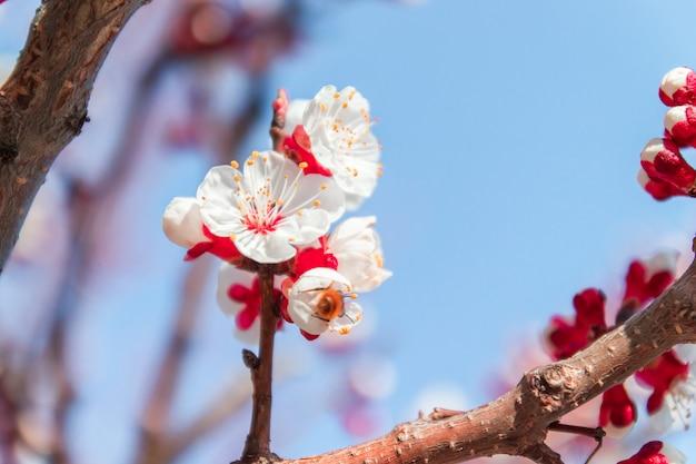 春の花美しい果樹園。