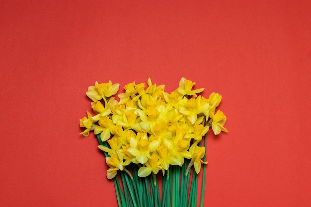 Красивый букет из желтых нарциссов на красном фоне