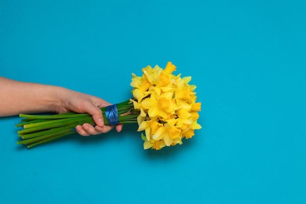 Красивые желтые нарциссы в женской руке на синем фоне
