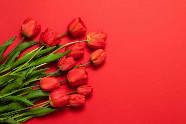 赤いパステル調の背景にチューリップの花と花のフレームの背景。フラット横たわっていた、上面図。