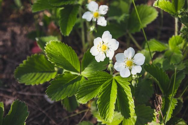 朝の光の中で若い植物