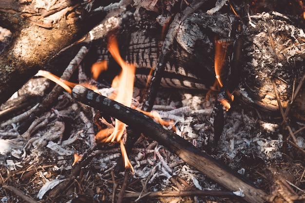 クローズアップ、木のたき火の炎