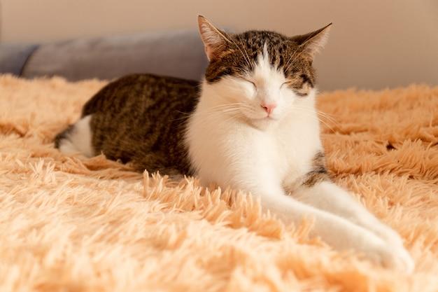 縞模様の灰色の猫はベッドに横たわって寝る
