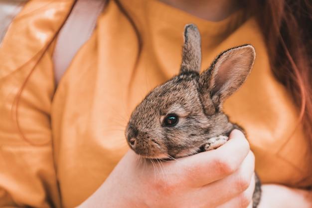 小さなかわいいウサギを保持している女性