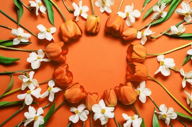 オレンジ色の背景に美しいオレンジ色のチューリップと白い水仙サークルフレームのトップビュー