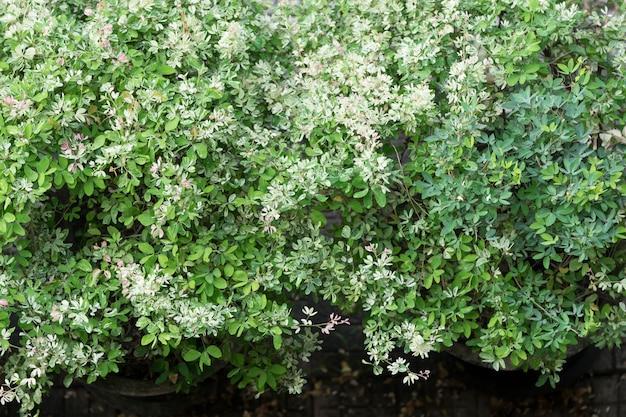 ブッシュと白い花の背景