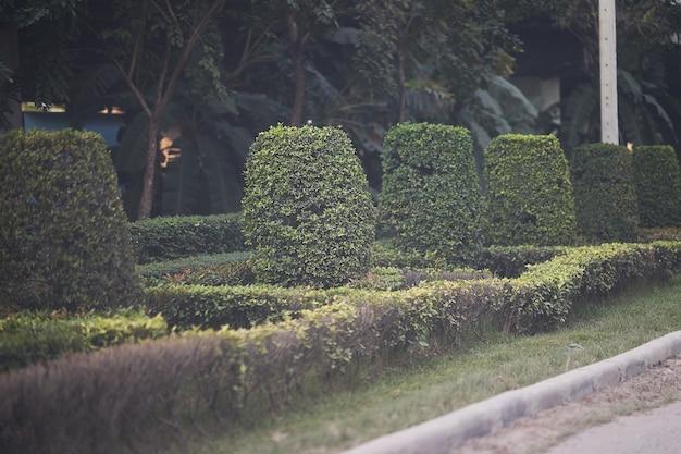 通りのトリミングサイドツリー